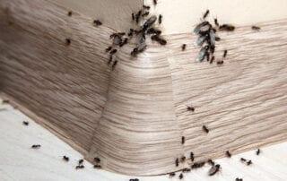 Home Pest Control Services